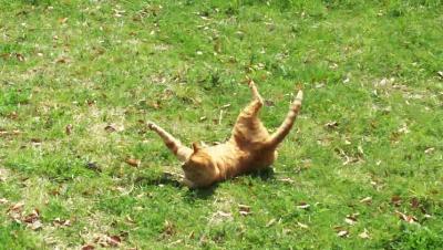 cat0.png