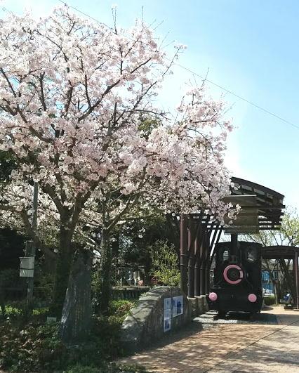 sakura-mizuma2.jpg