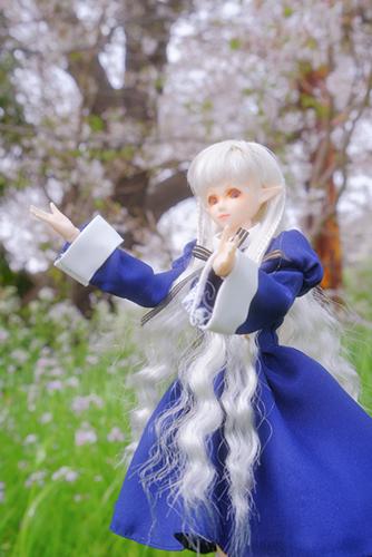 PARABOX、27cmノーマルボディ、フェアリーヘッド、メイクカスタム、エルフの女の子を連れて春の野原へ。桜も咲いていました