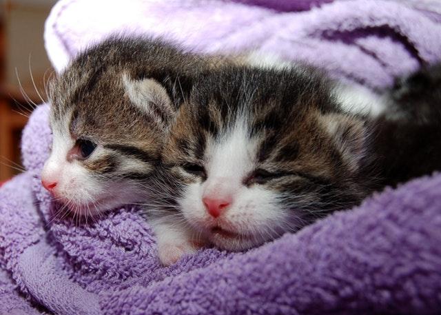 cat-young-cat-playful-pet-64147.jpeg