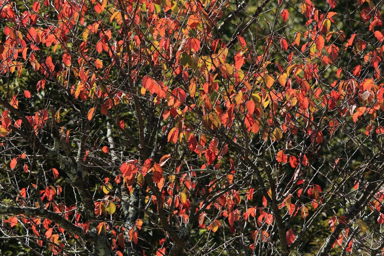 ブログ 桜もすっかり秋色へ.jpg