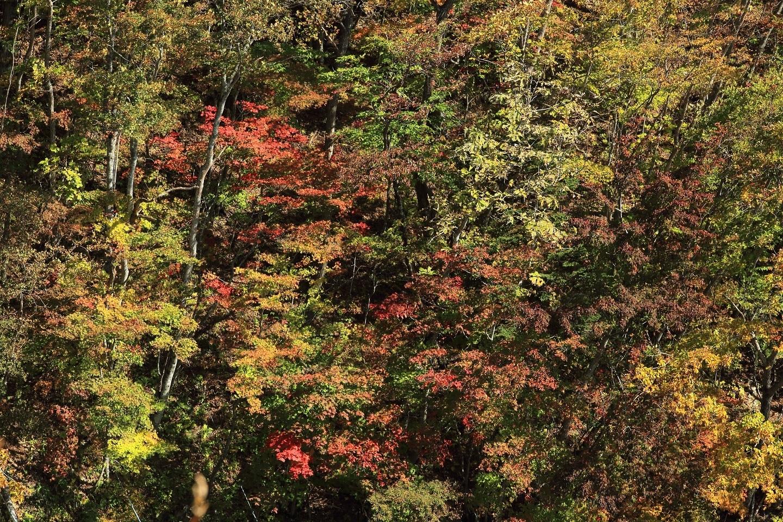 ブログ 塩原高原 紅葉か所の切り取り 2.jpg