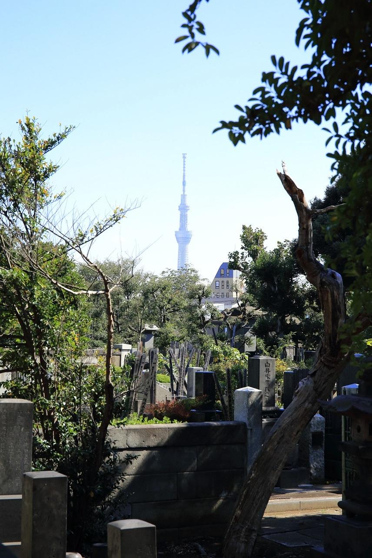 ブログ 谷中墓地からのスカイツリー.jpg