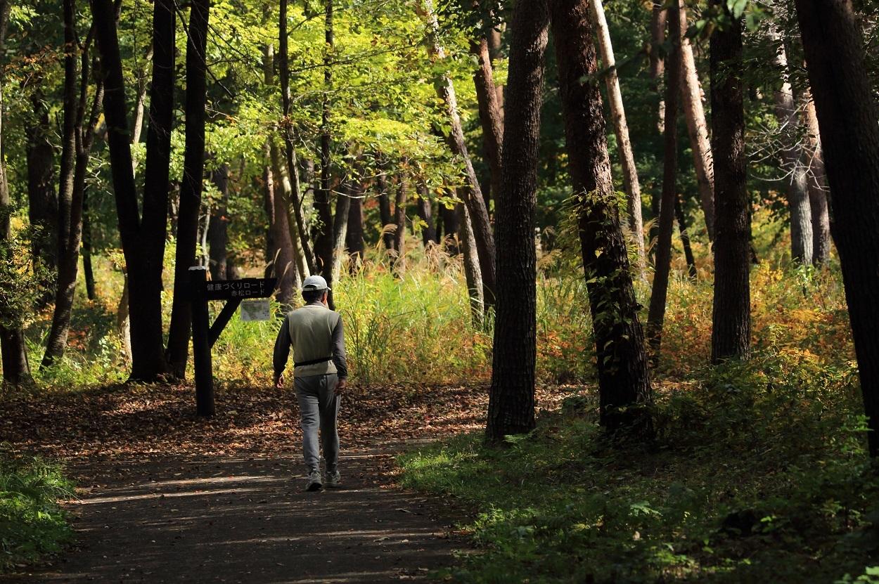 ブログ 公園の園路をお散歩です.jpg