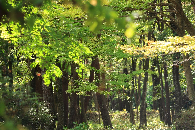 ブログ 公園の中の雑木林.jpg