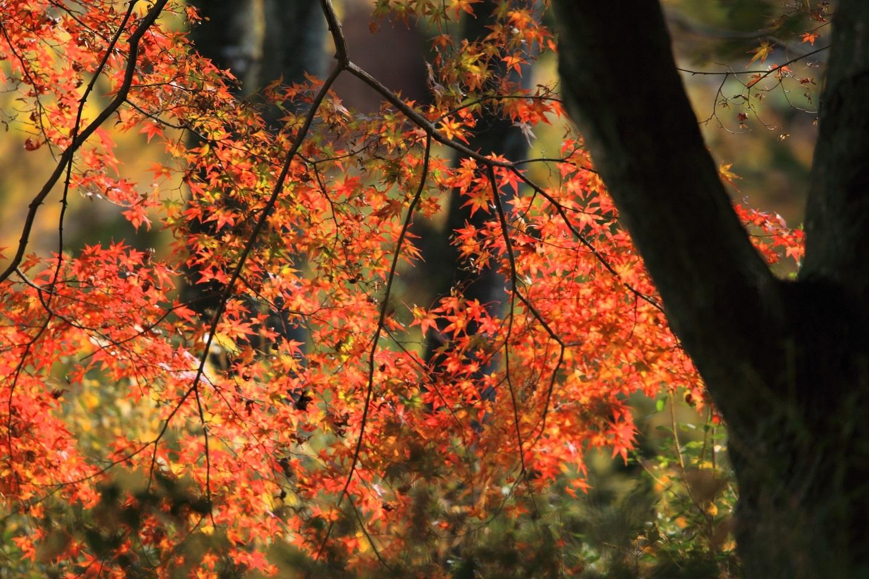 ブログ 降りて来た公園の紅葉.jpg