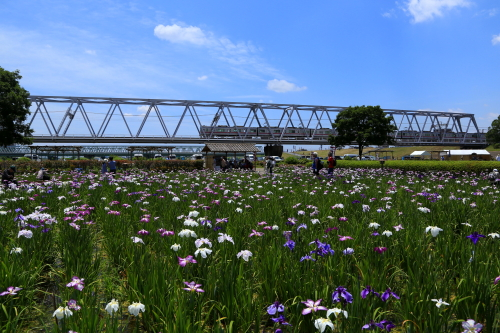 花の季節 ・・・ サムネイル画像