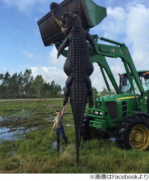 【巨大生物】アメリカ・フロリダで体長6メートル「超巨大なワニ」が捕まる!
