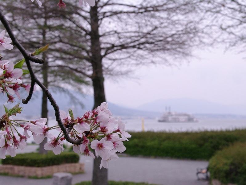 びわ湖湖岸の桜 その2