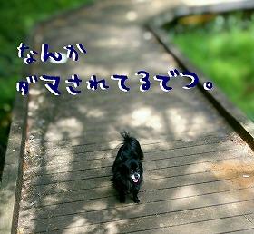 2016-05-01_15_49306.jpg
