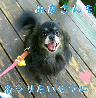 2016-05-04_10_49510.jpg