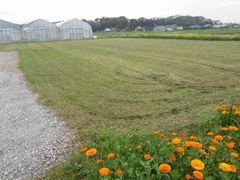 【写真】花畑前の草刈りを終えたところ