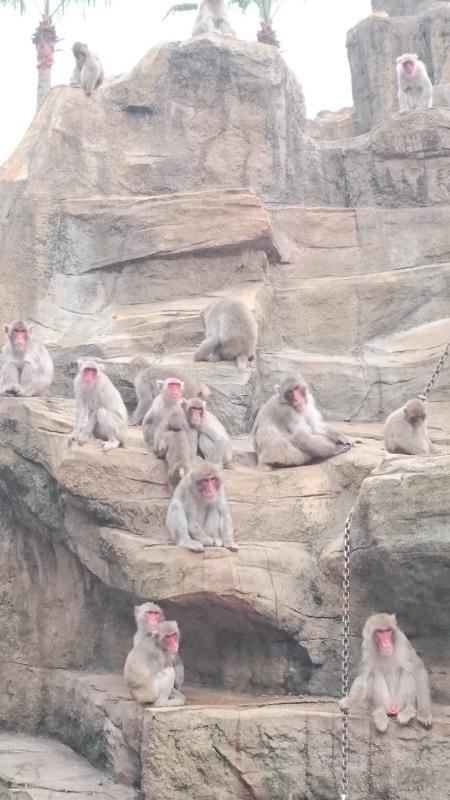 猿山のお猿さんたち✨❤✨