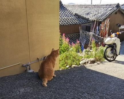 香川猫島5