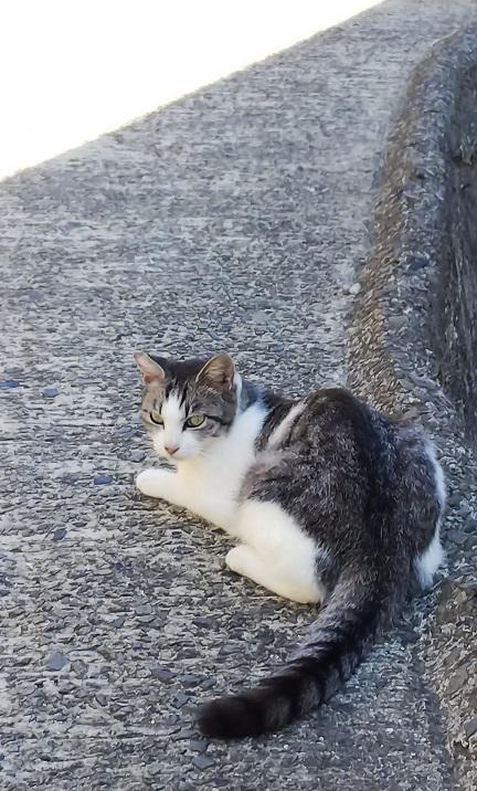香川猫島6