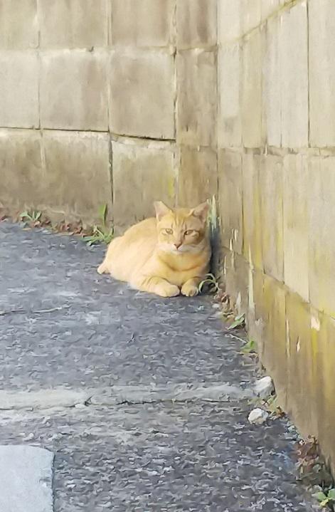 香川猫島11