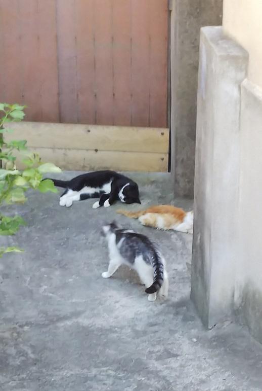 香川猫島12