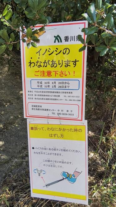 香川猫島13