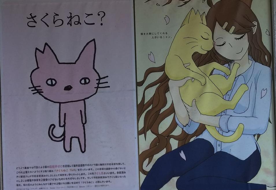 香川猫島15