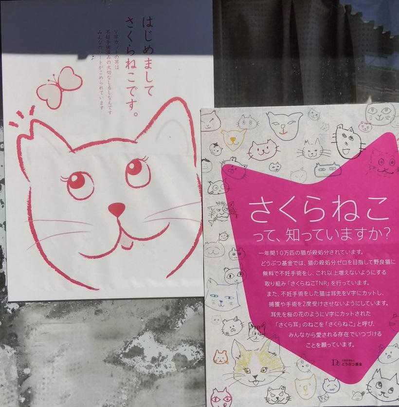 香川猫島16