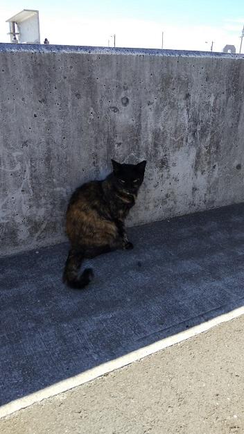 香川猫島17