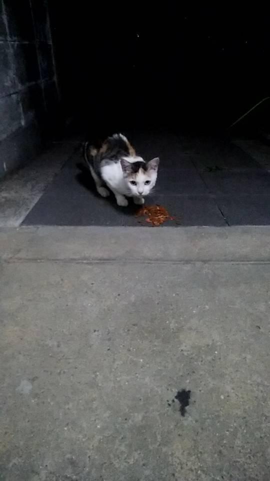 アグネス宅配猫④