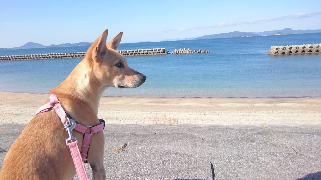 海辺のお散歩が大好きなマリリン✨❤✨
