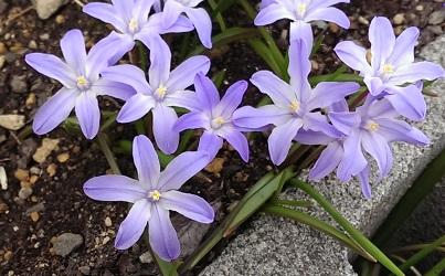 北海道青い花