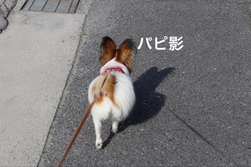 fc2blog_201604231844356a7.jpg