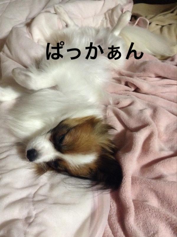 fc2blog_2016071712055033f.jpg