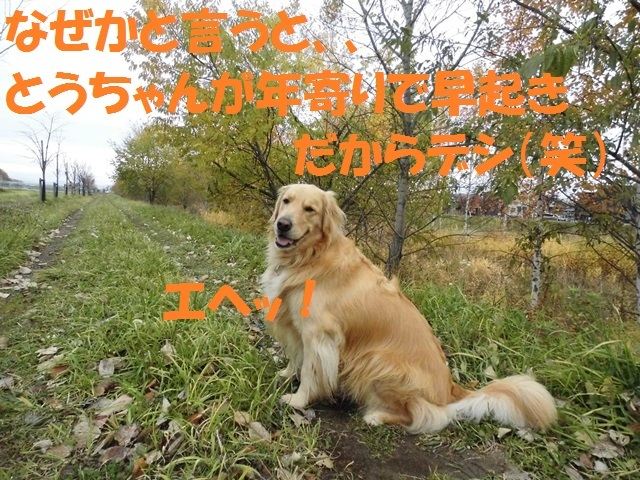CIMG2699_P.jpg