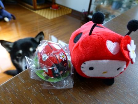 てんとう虫キティ5