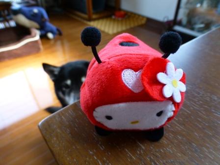 てんとう虫キティ10