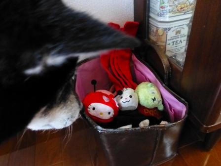 てんとう虫キティ24