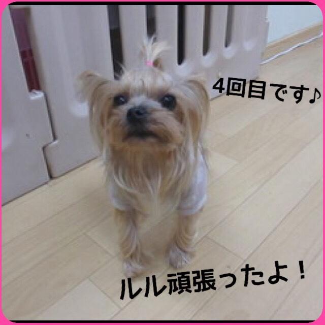 fc2blog_2016040520283022b.jpg