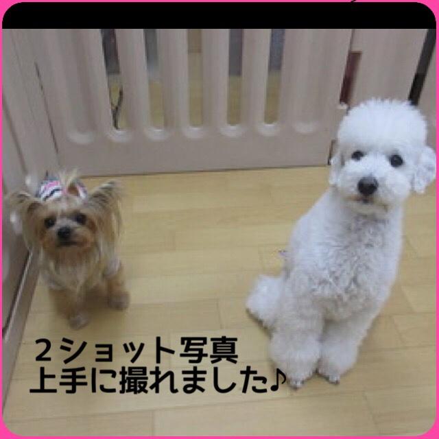 fc2blog_20160405204001c46.jpg