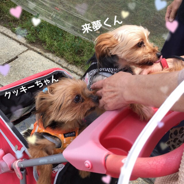 fc2blog_2016062709410242a.jpg