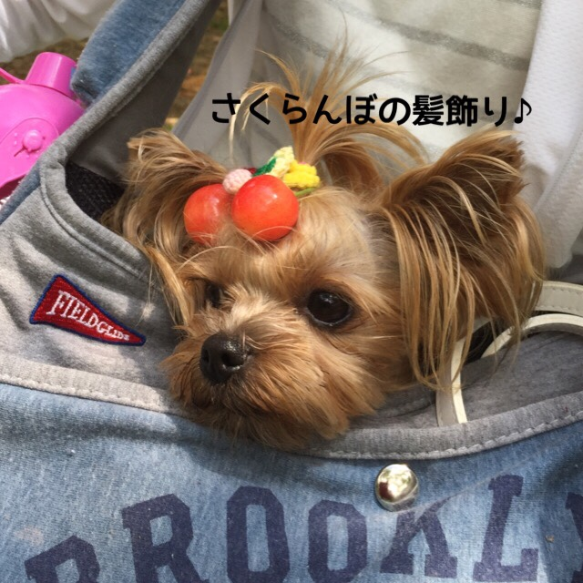 fc2blog_201606270942469a7.jpg