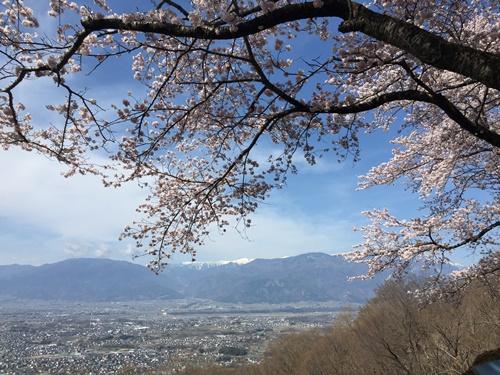 里山の桜500