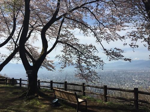 里山の桜910