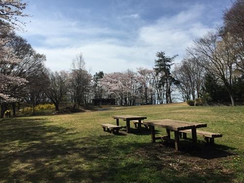 里山の桜14