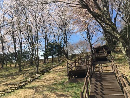 里山の桜16