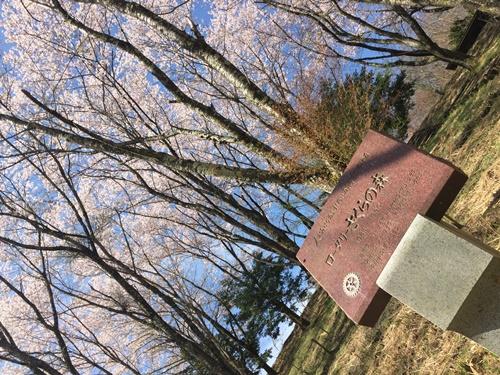 里山の桜17