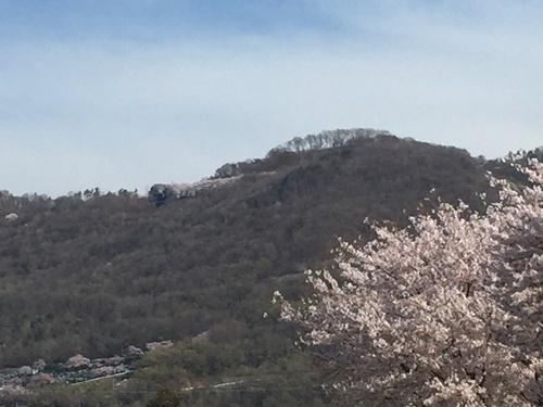 里山の桜1