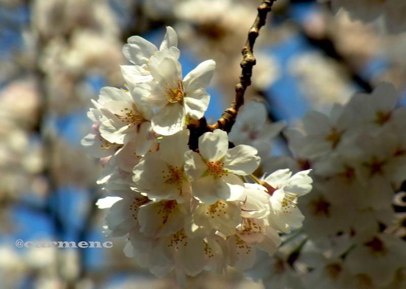 桜ひと枝の先の