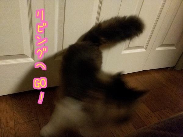 20160530131334af8.jpg