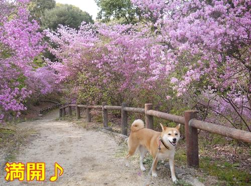 1廣田山公園