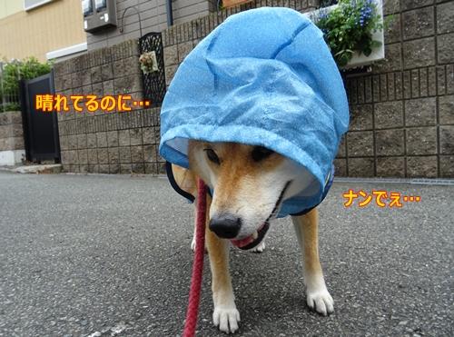 4雨降ってないよ