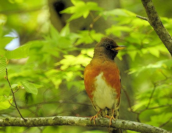 素敵な鳥見でした! (CT結果、少し詳しく)