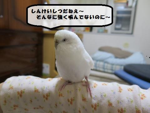 20160424100746a8d.jpg